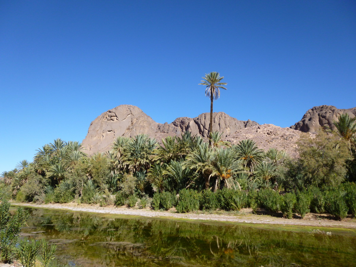 Full-Day Ouarzazate and Oasis Fint Private Tour