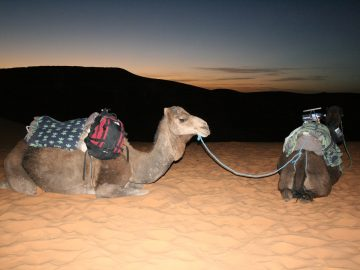 Travel to Sahara, Days from Marrakeck to Fes,Night in Bivouac Desert Sahara: Merzouga - Erg Chebbi