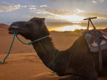 travel to morocco, visit Agadir,Desert Morocco This two nights in the Desert trip begins at evening, from your accommodation. The trek will start right into the desert for 1:30min