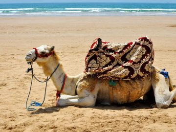 travel to morocco, visit Agadir