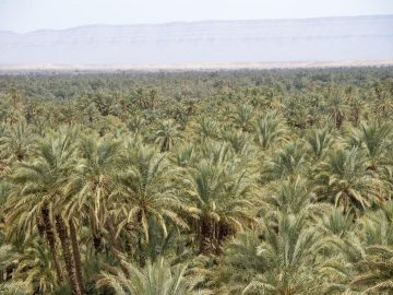 Travel to Sahara, Days from Marrakeck to Fes