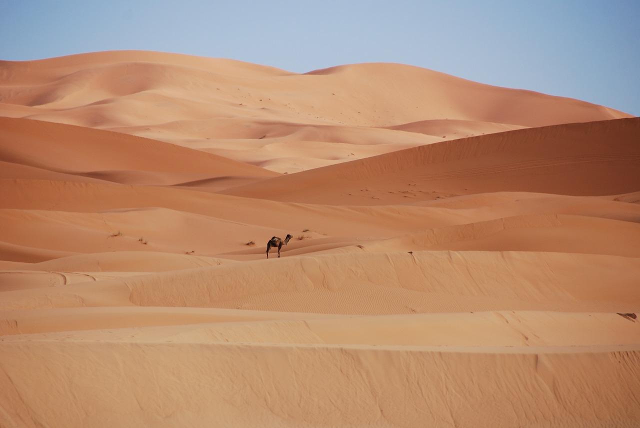 Camel Trekking in the Moroccan Sahara